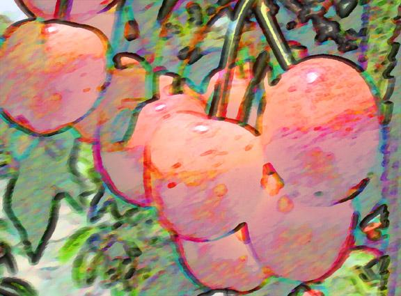 Beaumont Cherries