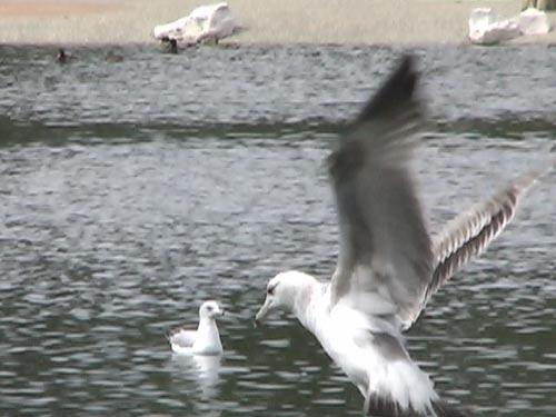 Birds Aloft