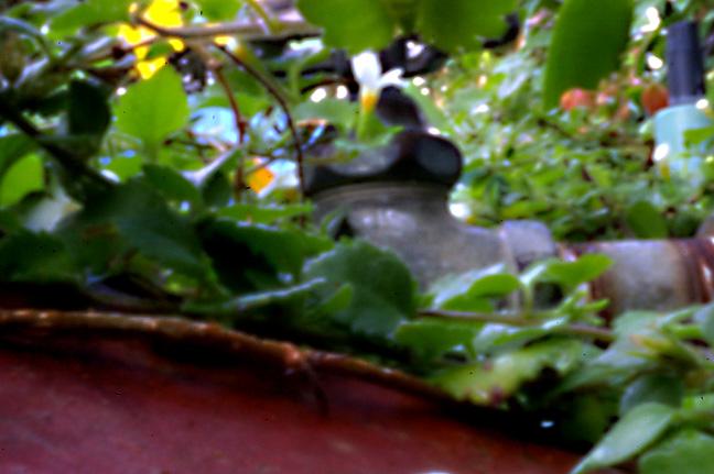 The Garden Planter